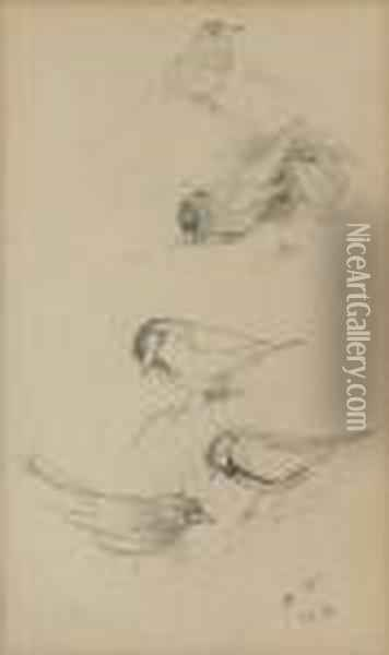 Two Sheets Of Studies Of Birds Including Finches, Blue Tits And Thrushes Oil Painting - Archibald Thorburn