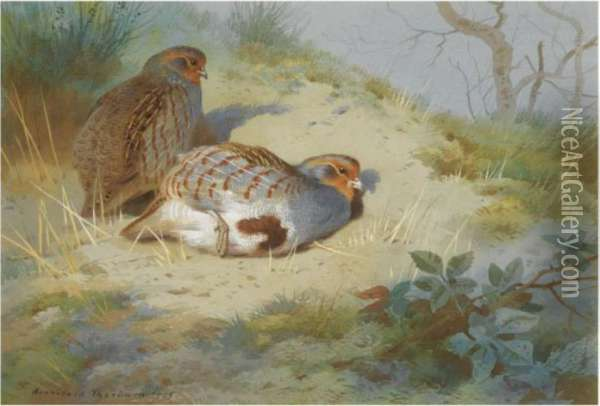 A Pair Of Partridges On A Sandy Bank Oil Painting - Archibald Thorburn