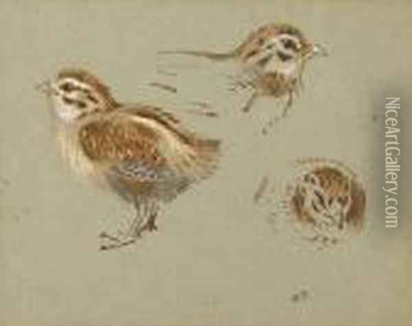 Study Of Partridge Chick Oil Painting - Archibald Thorburn