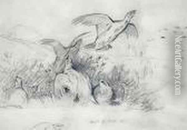 A Sketch Of Grouse Oil Painting - Archibald Thorburn