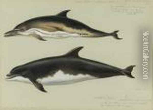 Common Dolphin And Bottlenose Dolphin Oil Painting - Archibald Thorburn