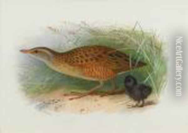 A Corncrake And Chick Oil Painting - Archibald Thorburn