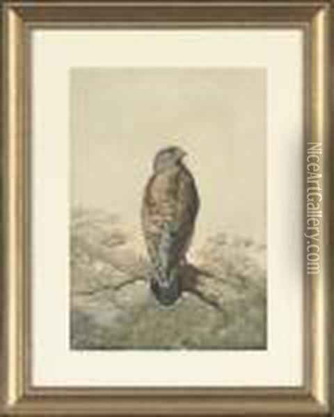 A Perched Kestrel Oil Painting - Archibald Thorburn