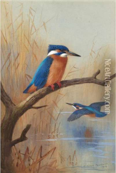 A Pair Of Kingfishers Oil Painting - Archibald Thorburn