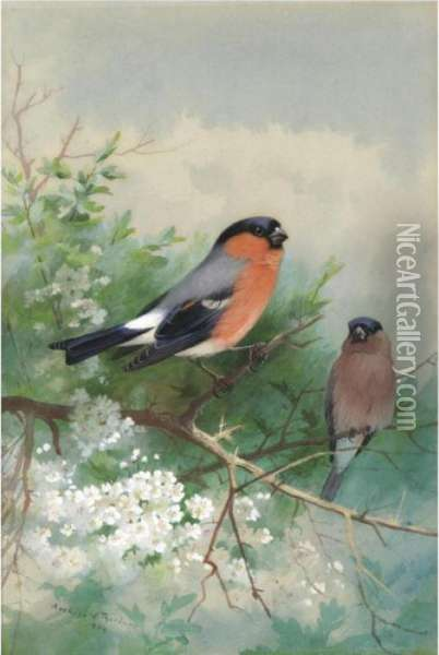 A Pair Of Bullfinches Oil Painting - Archibald Thorburn