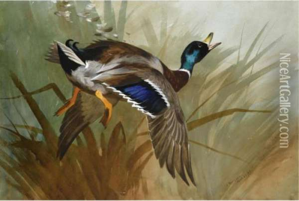 Winged Oil Painting - Archibald Thorburn