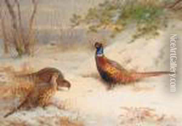 Winter Dawn Pheasants In The Snow Oil Painting - Archibald Thorburn