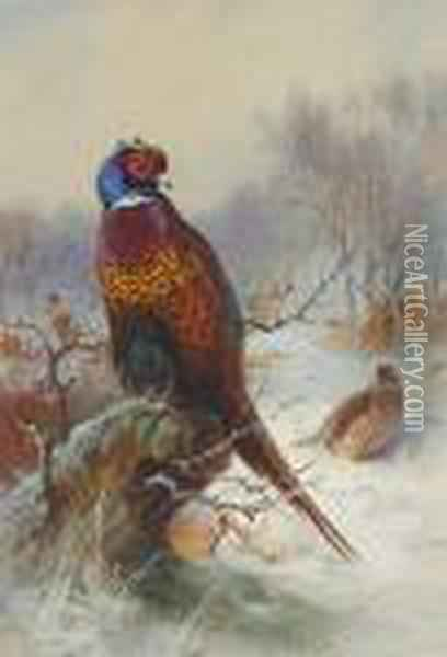 Pair Of Pheasants Oil Painting - Archibald Thorburn