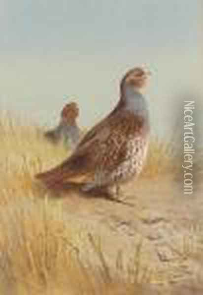 Pair Of English Partridges Oil Painting - Archibald Thorburn