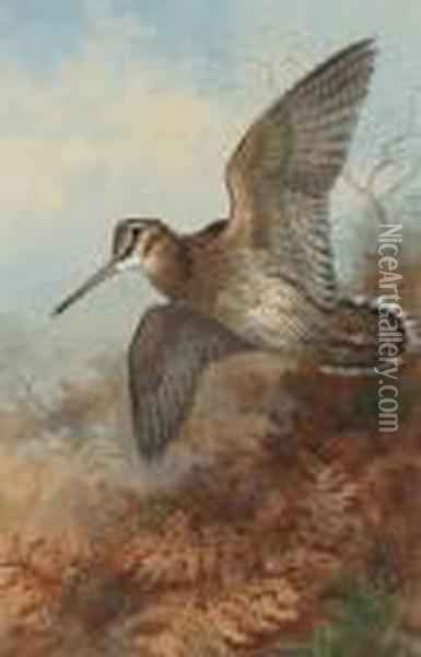 A Woodcock Roding Oil Painting - Archibald Thorburn