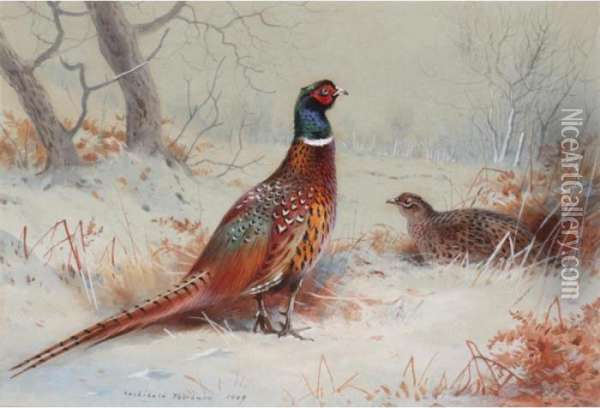 Pheasants In The Snow Oil Painting - Archibald Thorburn