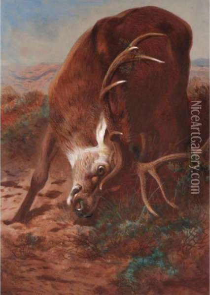 Red Stag Fraying Oil Painting - Archibald Thorburn