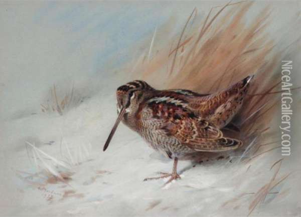 Woodcock Oil Painting - Archibald Thorburn