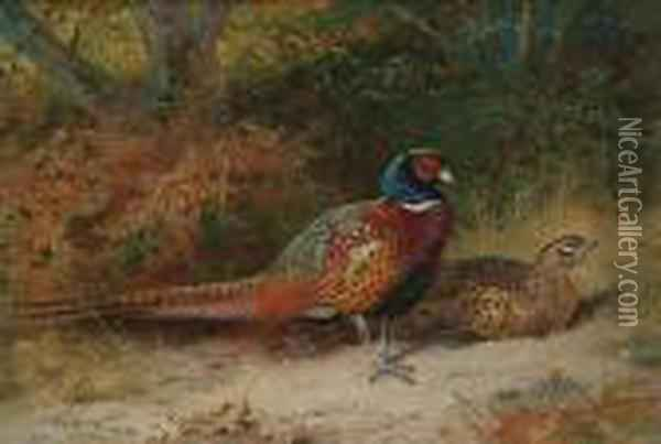 Pheasants In A Wood, A Cock And A Hen Oil Painting - Archibald Thorburn
