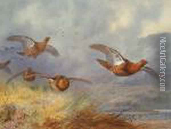Grouse In Flight Accross An Extensive Highland Landscape Oil Painting - Archibald Thorburn
