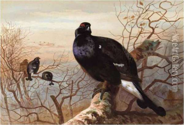 The Evening Roost, Black Game Oil Painting - Archibald Thorburn