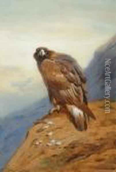 Golden Eagle Oil Painting - Archibald Thorburn