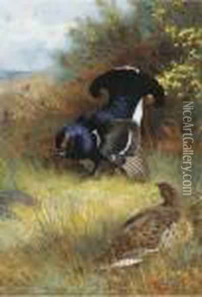 On The Edge Of The Moor; Blackcock Displaying Oil Painting - Archibald Thorburn