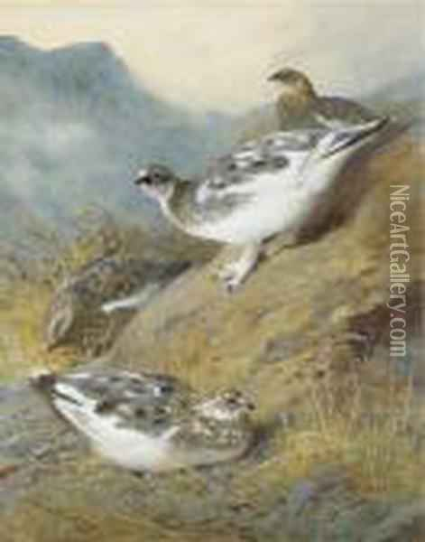 Ptarmigan; Adult Male, Female And Young, Autumn Plumage Oil Painting - Archibald Thorburn