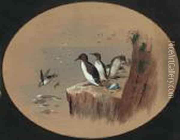 Puffins Oil Painting - Archibald Thorburn