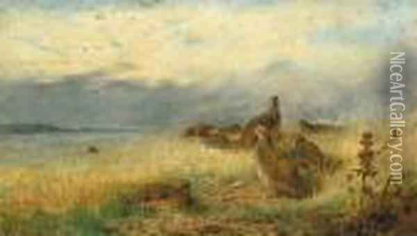 A Covey Of Partridge In The Stubble, With Lapwings Flying Overhead Oil Painting - Archibald Thorburn