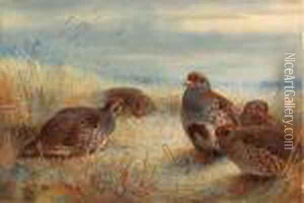 A Covey Of Partridge In The Stubble Oil Painting - Archibald Thorburn