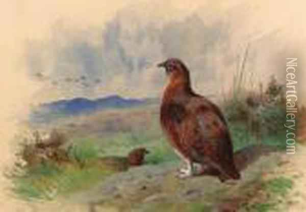 Red Grouse On The Alert Oil Painting - Archibald Thorburn