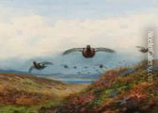 Red Grouse In Flight Over Moorland Oil Painting - Archibald Thorburn