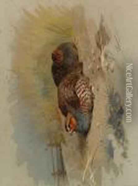 Dusting Partridge Oil Painting - Archibald Thorburn