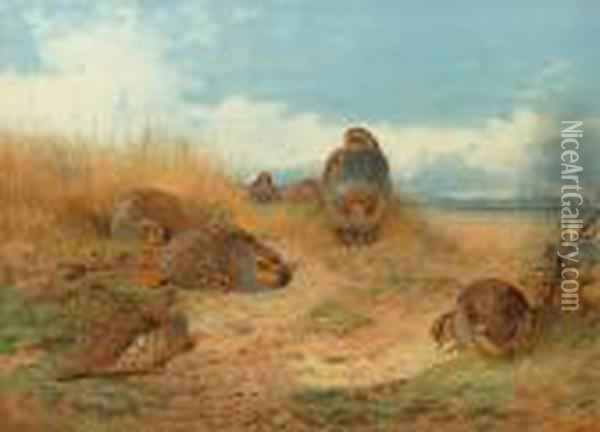 Basking In The Noonday Sun: A Covey Of Grey Partridge Oil Painting - Archibald Thorburn