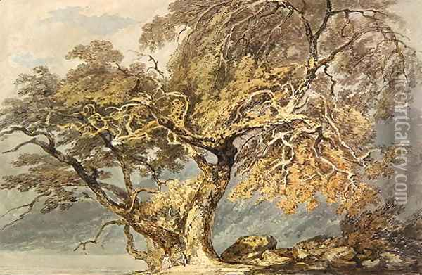 A Great Tree, c.1796 Oil Painting - Joseph Mallord William Turner