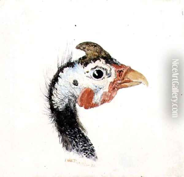Guinea Fowl, from The Farnley Book of Birds, c.1816 Oil Painting - Joseph Mallord William Turner