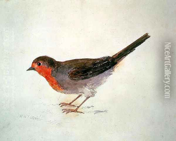 Robin, from The Farnley Book of Birds, c.1816 Oil Painting - Joseph Mallord William Turner