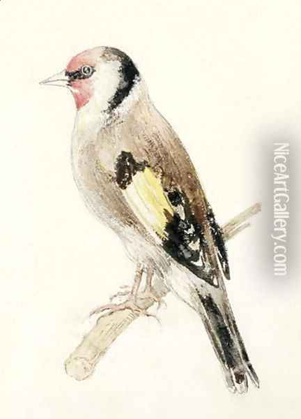 Goldfinch, from The Farnley Book of Birds, c.1816 Oil Painting - Joseph Mallord William Turner