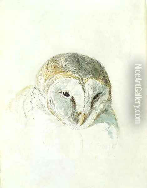 White Barn Owl, from The Farnley Book of Birds, c.1816 Oil Painting - Joseph Mallord William Turner