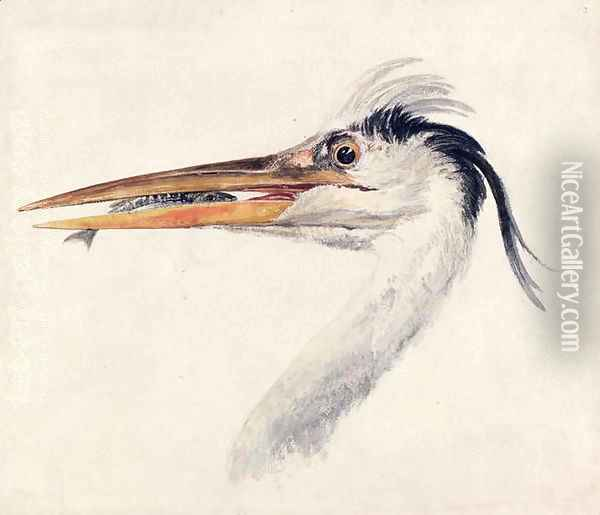 Heron with a fish Oil Painting - Joseph Mallord William Turner