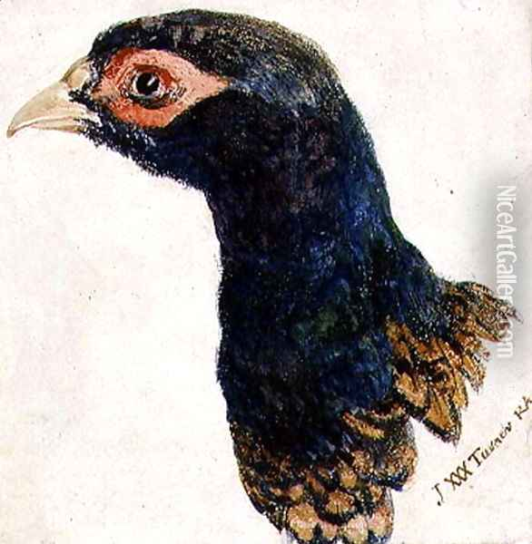 Cock Pheasant, The Farnley Book of Birds, c.1816 Oil Painting - Joseph Mallord William Turner