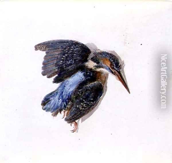 Kingfisher, from The Farnley Book of Birds, c.1816 Oil Painting - Joseph Mallord William Turner