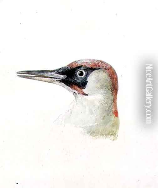 Woodpecker, from The Farnley Book of Birds, c.1816 Oil Painting - Joseph Mallord William Turner