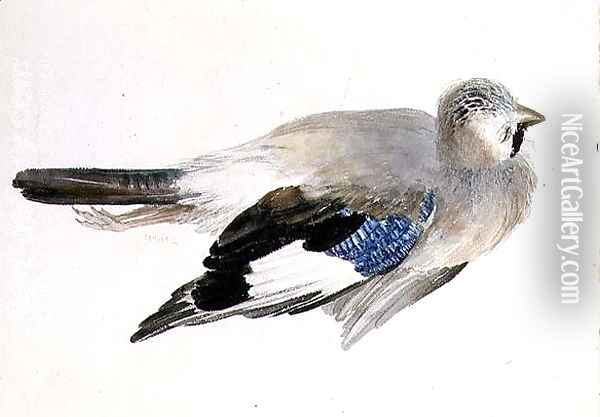 Jay, from The Farnley Book of Birds, c.1816 Oil Painting - Joseph Mallord William Turner