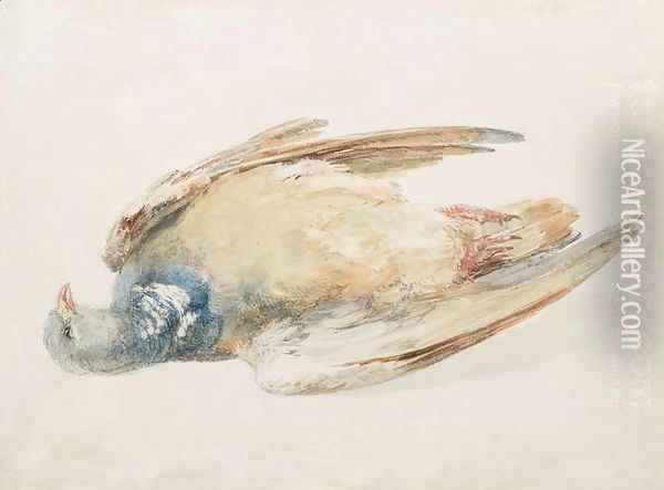 Pigeon, from The Farnley Book of Birds, c.1816 Oil Painting - Joseph Mallord William Turner
