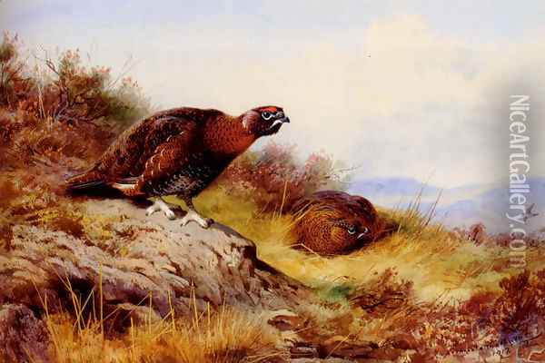Red Grouse On The Moor Oil Painting - Archibald Thorburn