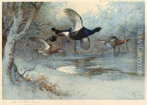 Blackcock Through the Silver Birches Oil Painting - Archibald Thorburn