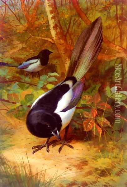Magpies Oil Painting - Archibald Thorburn