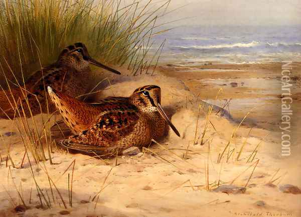 Woodcock Nesting On A Beach Oil Painting - Archibald Thorburn