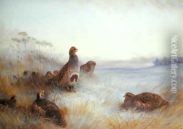 Partridges in Early Morning, 1910 Oil Painting - Archibald Thorburn