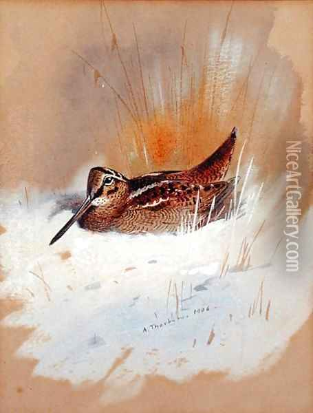 Woodcock in Snow, 1906 Oil Painting - Archibald Thorburn