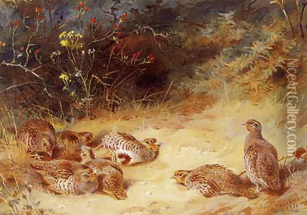 Autumn Partridge Dusting Oil Painting - Archibald Thorburn