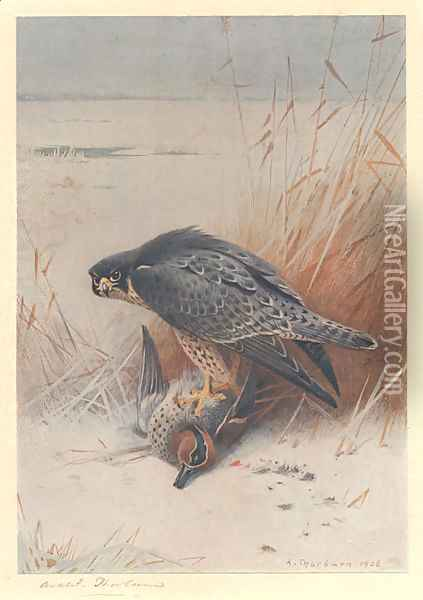 Peregrine Falcon on Teal Oil Painting - Archibald Thorburn