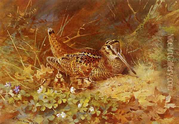 Woodcock and Chicks Oil Painting - Archibald Thorburn